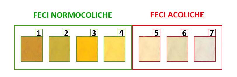 Carta colorimetrica delle feci